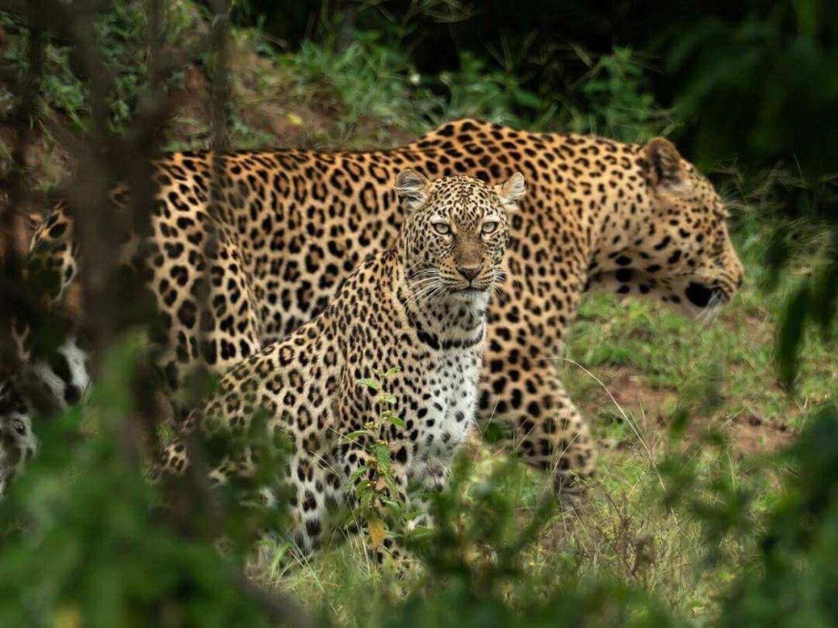 Tailormade Africa 3