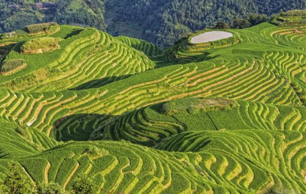 Take a day trip to Longji Rice Terraces