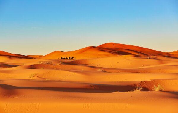 Watch the sunrise over the Sahara