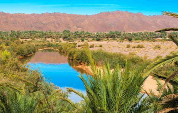 Visit a desert oasis