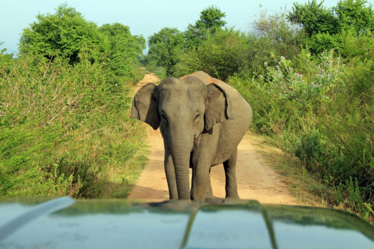 031 Sri Lanka Udawalawe Elephant 2