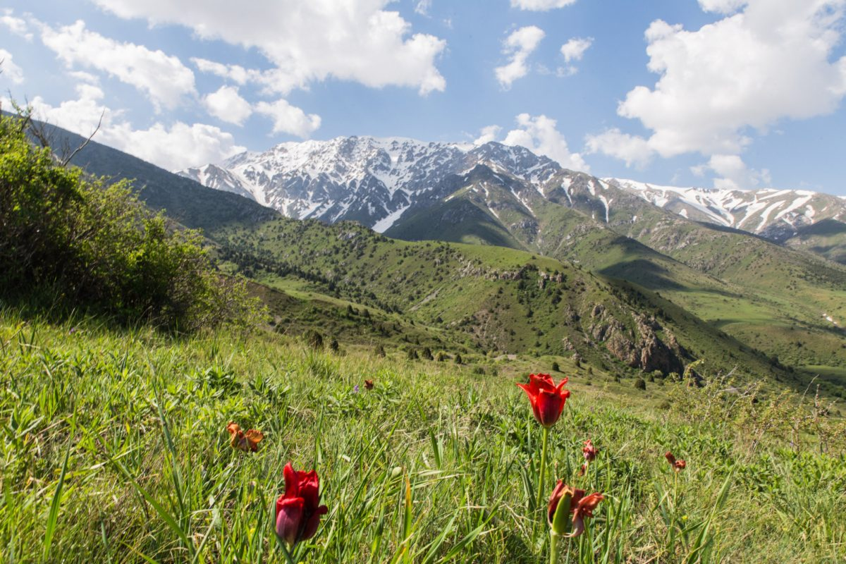Aksu Zhabagly nature reserve near Shymkent and Tashkent