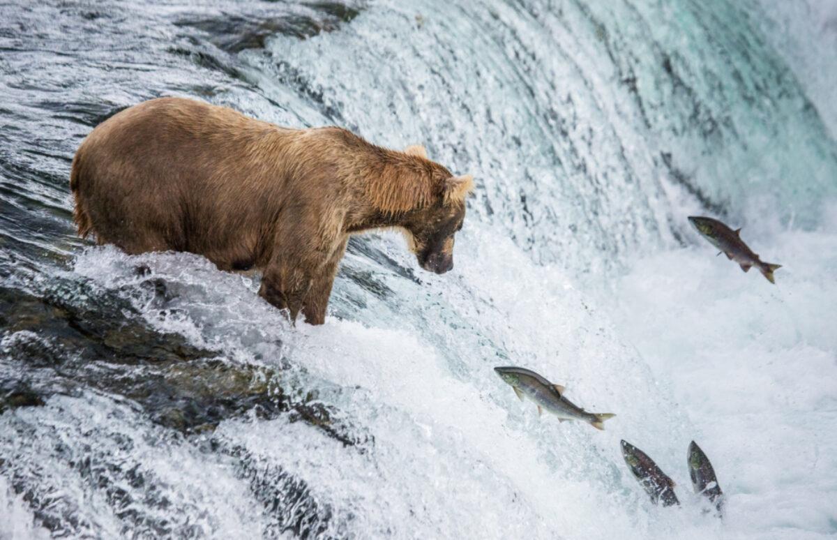 Alaska_Katmai-National-Park