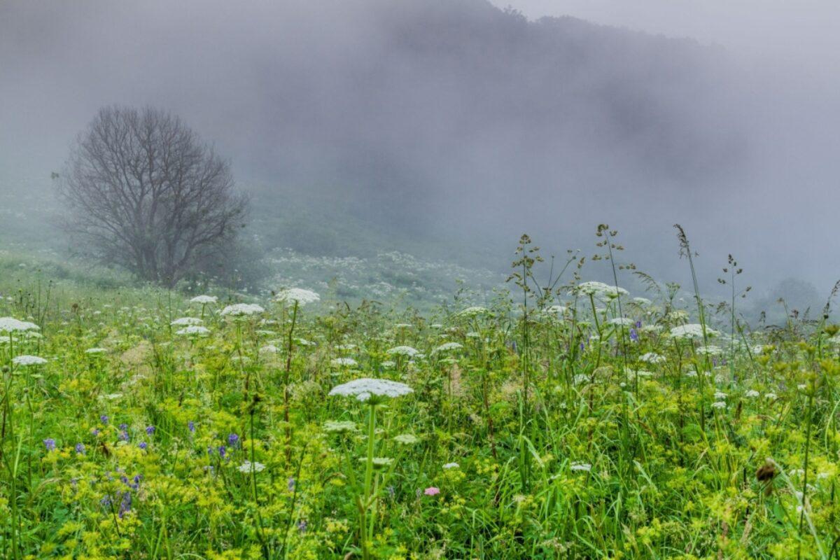 Armenia Dilijan National Park2