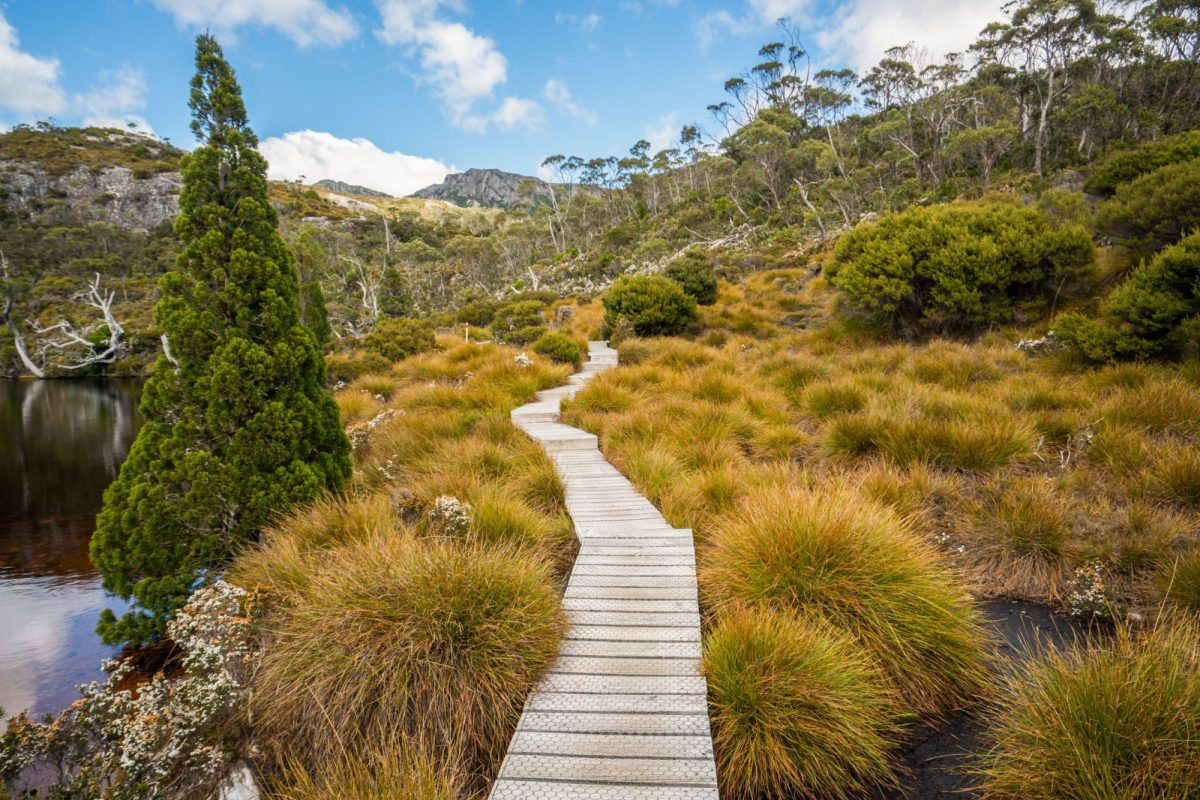 Aus Tasmania Cradle mountain national park 3