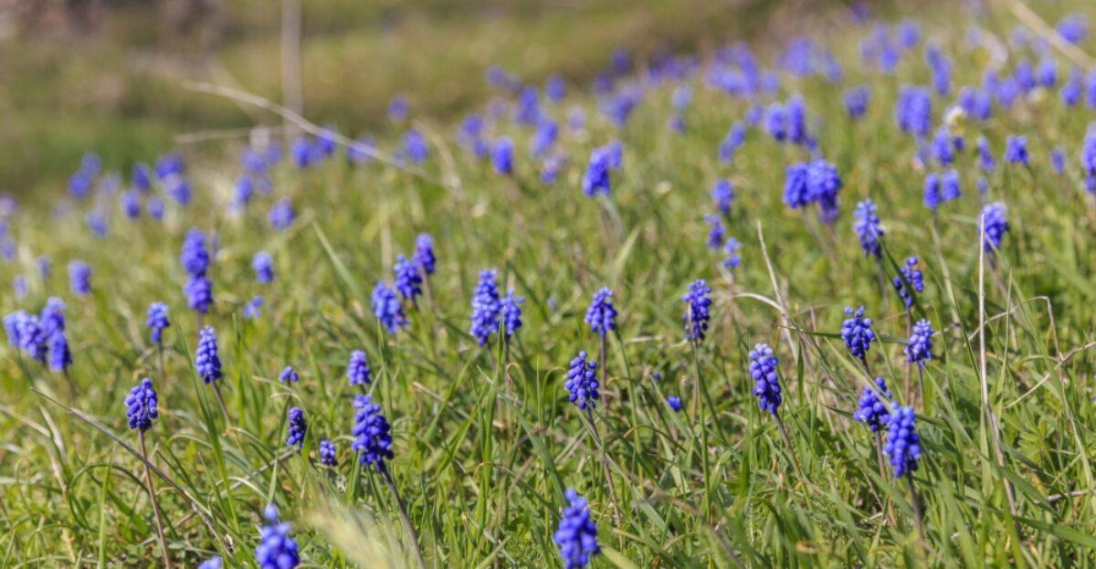 Azerbaijan Lahij wildflowers near the village