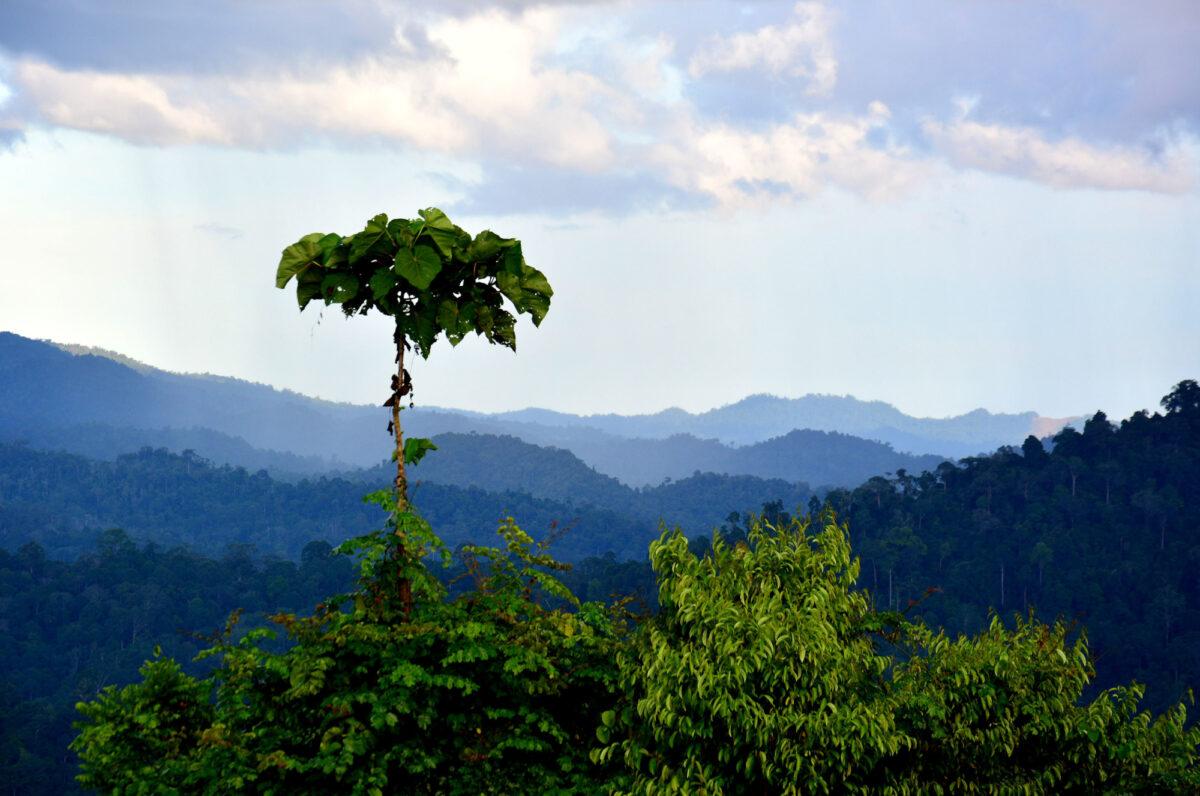 Borneo_Danumvalley