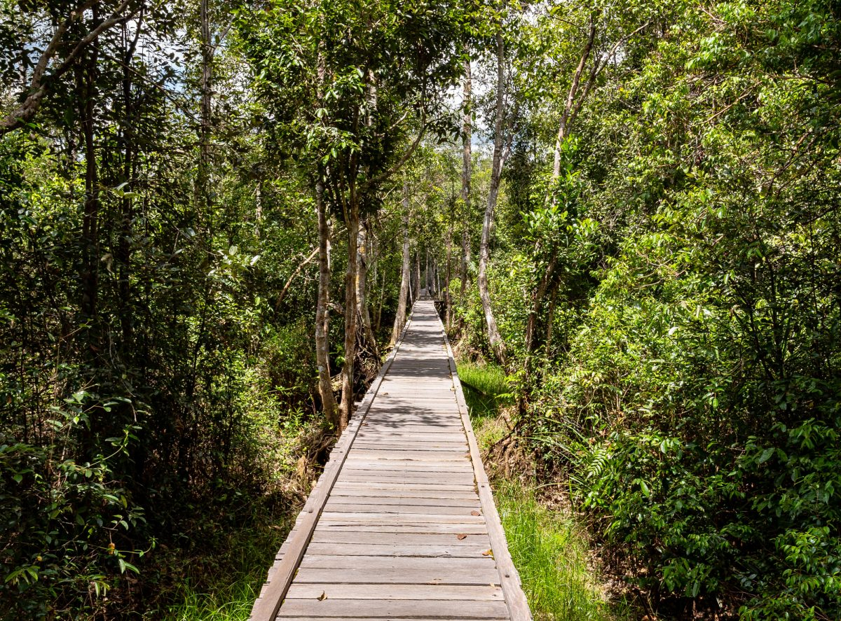 Borneo_Kalimantanpath_lowres
