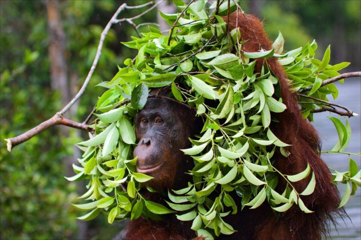 Borneo_Sabah_Sepilok