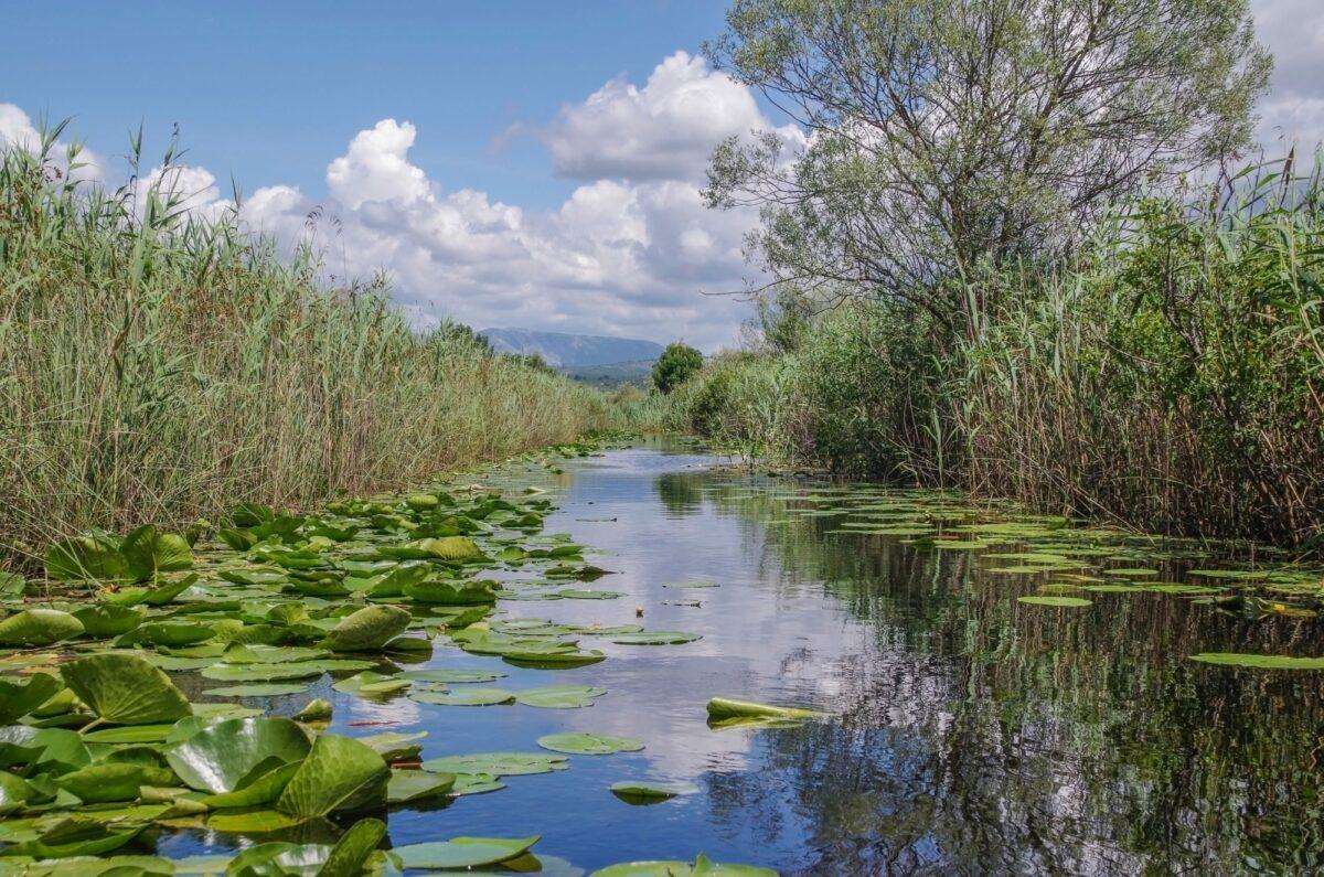 Bosnia Hutovo Blato Nature Reserve2