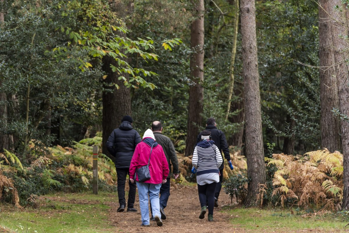 Brockenhurst England New Forest