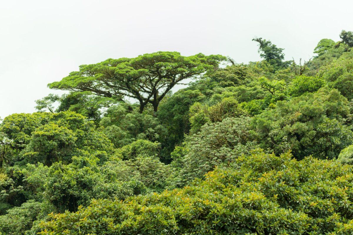 Cpsta Rica Monteverde canopy