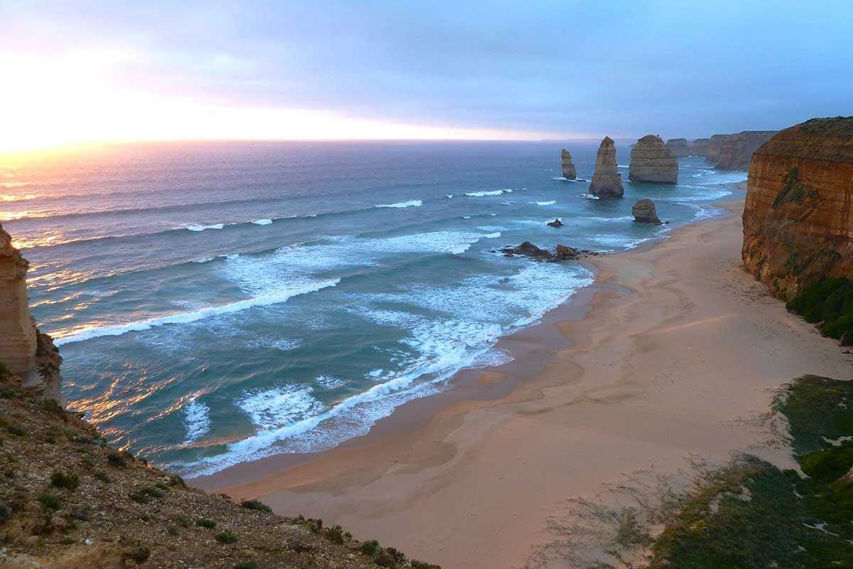 Echidna Australia great ocean road