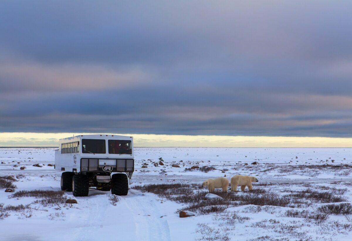 Frontiers North Canada polar bear
