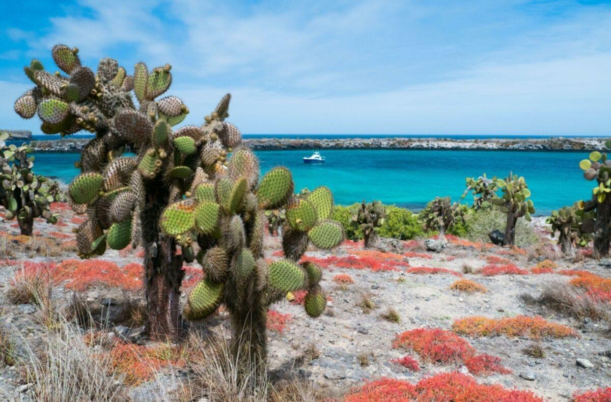 Galapagos plazaisland