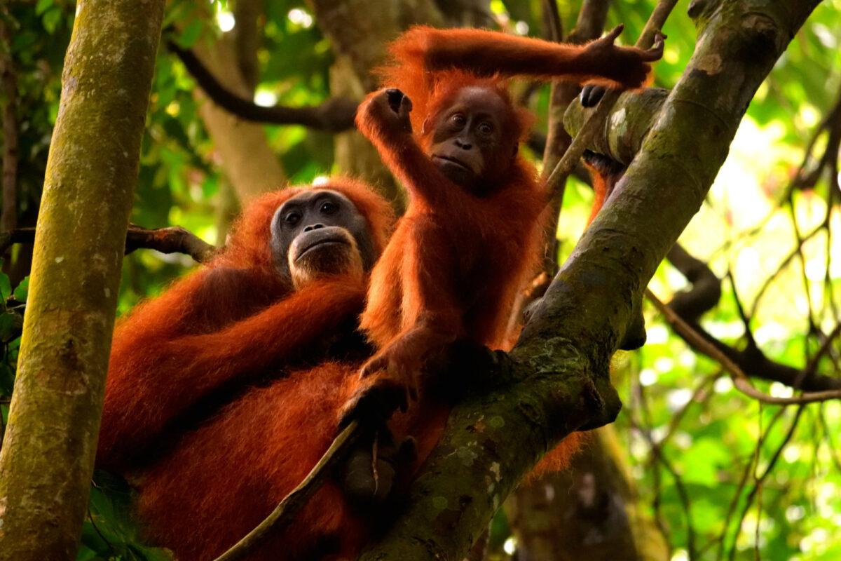 Gunung Leuser National Park Indonesia Sumatra