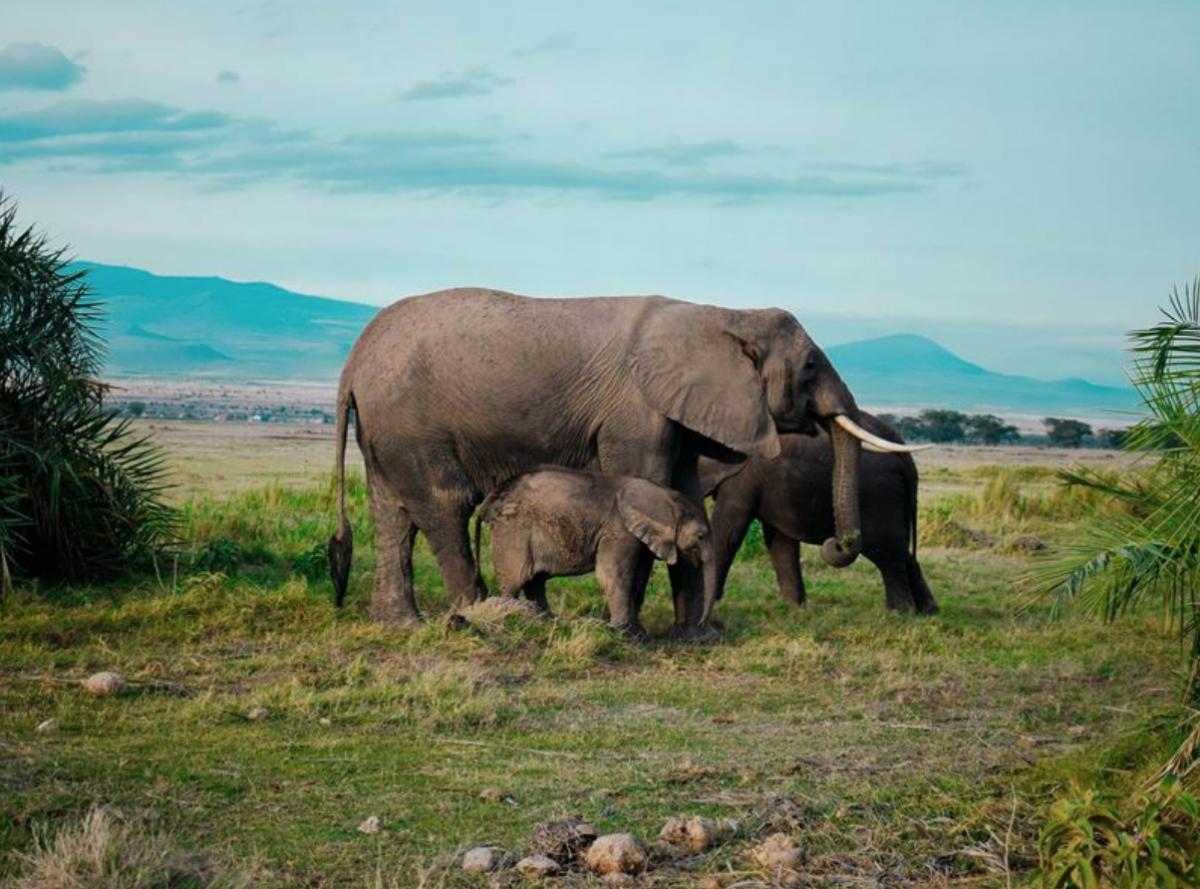 Highlights of Kenya Amboseli NP