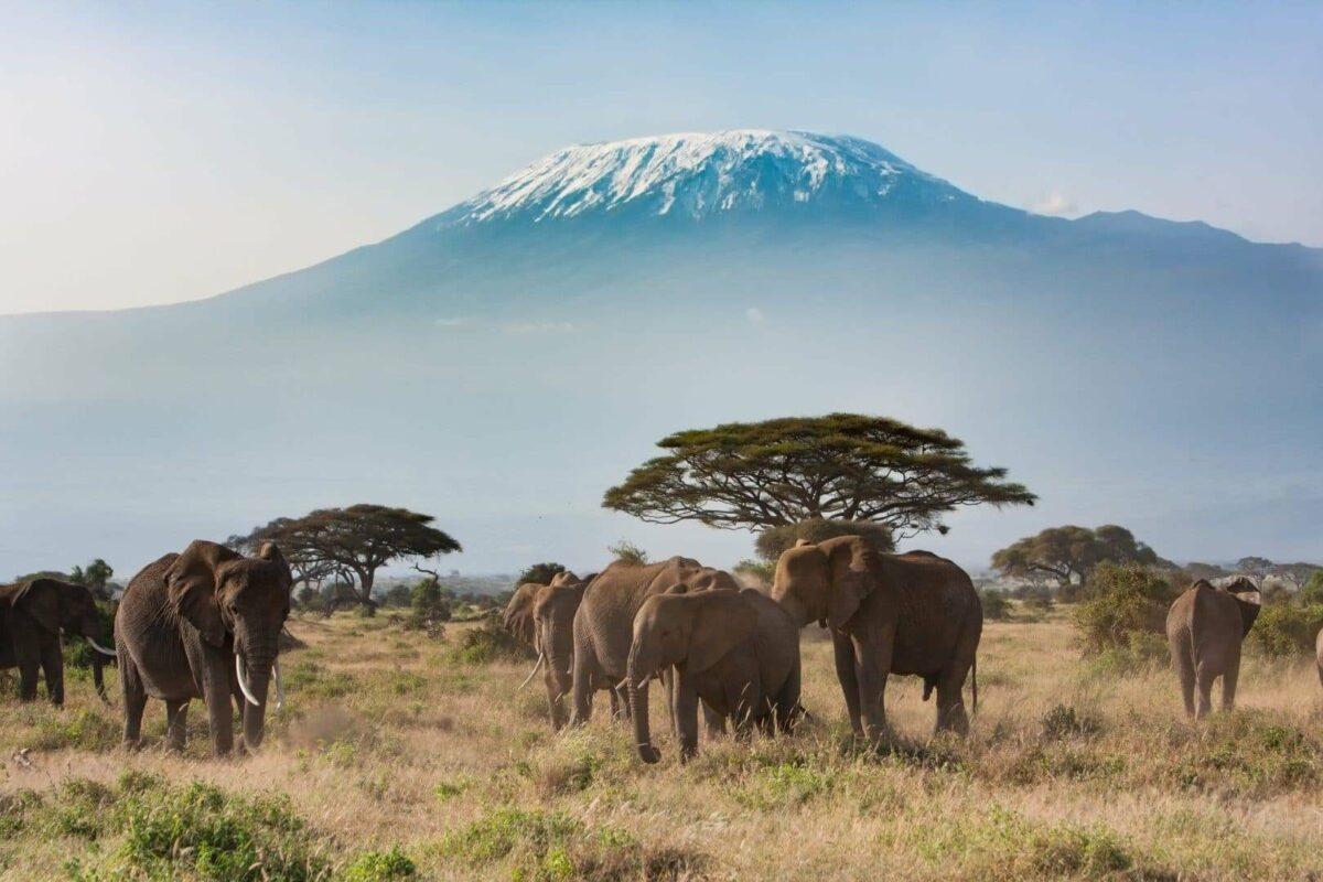 Highlights of Kenya Amboseli