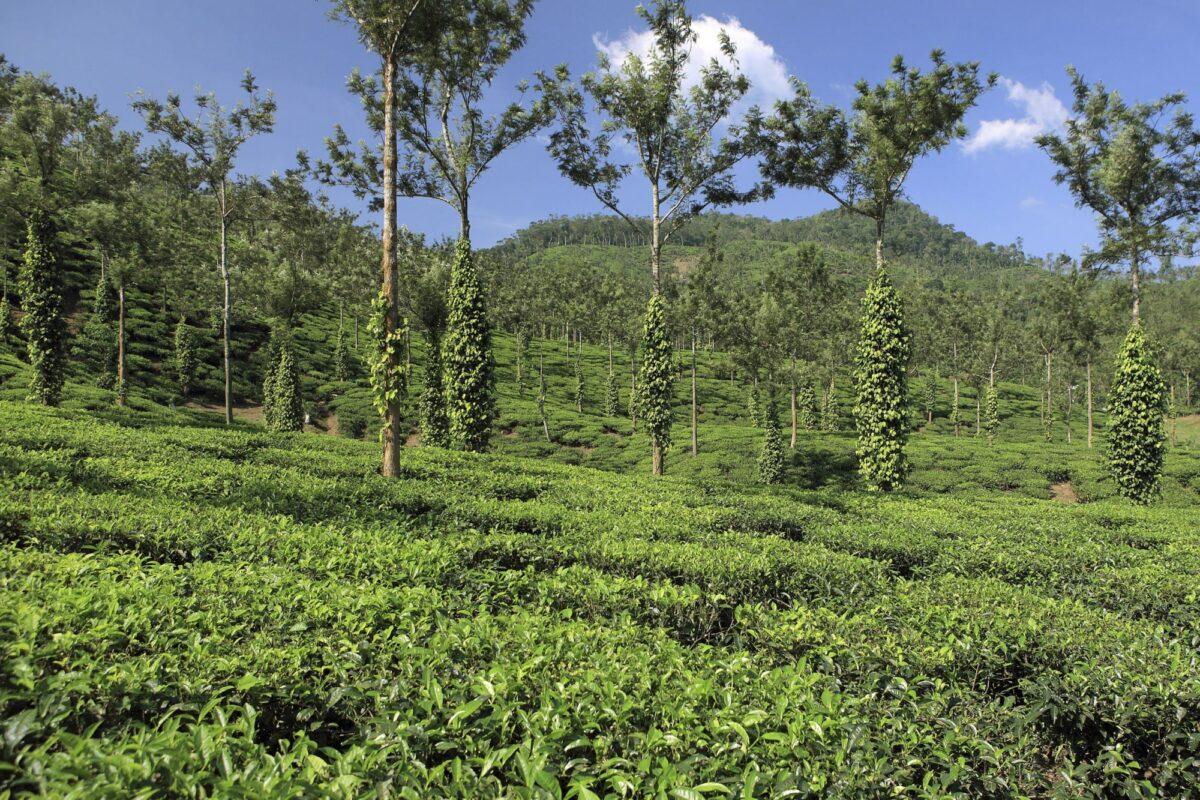 India Kerala Thekkady