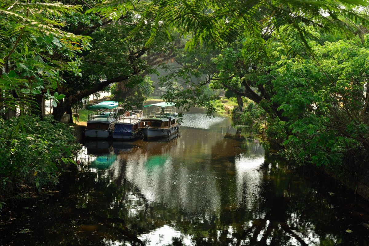 India kerala Overgrown channels in the Alleppey