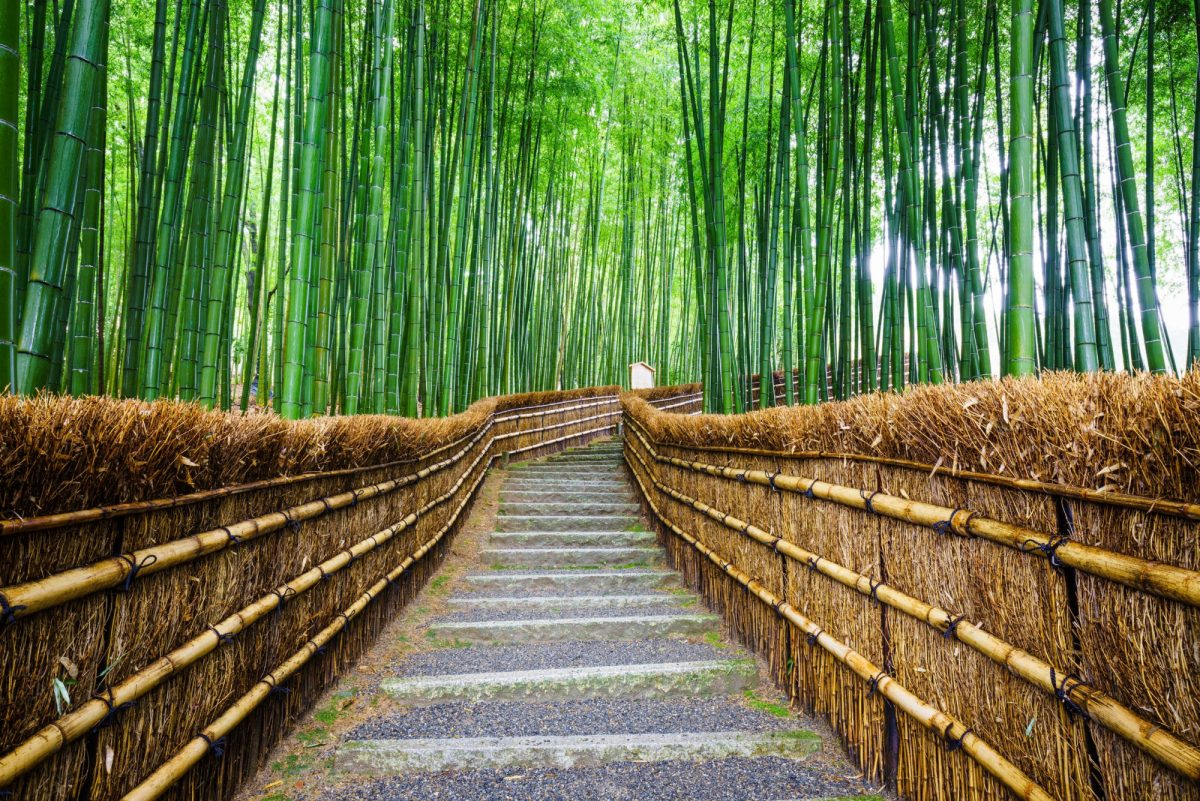 Japan Kyoto Path to bamboo forest Arashiyama
