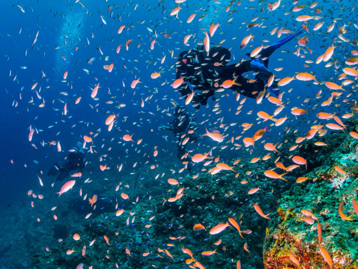Japan Okinawa scubadiving2