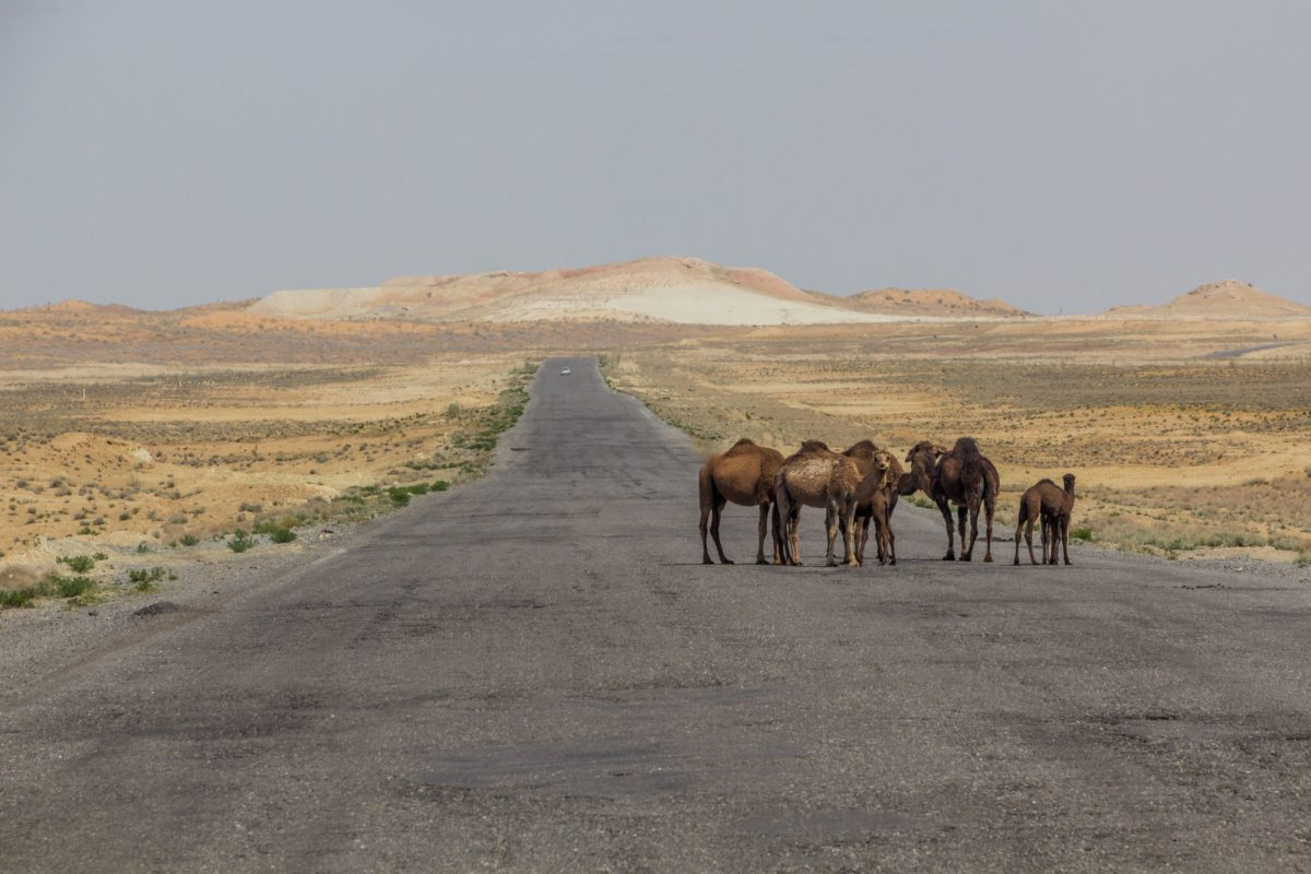 Karakum desert between Ashgabat and Konye Urgench Turkmenistan