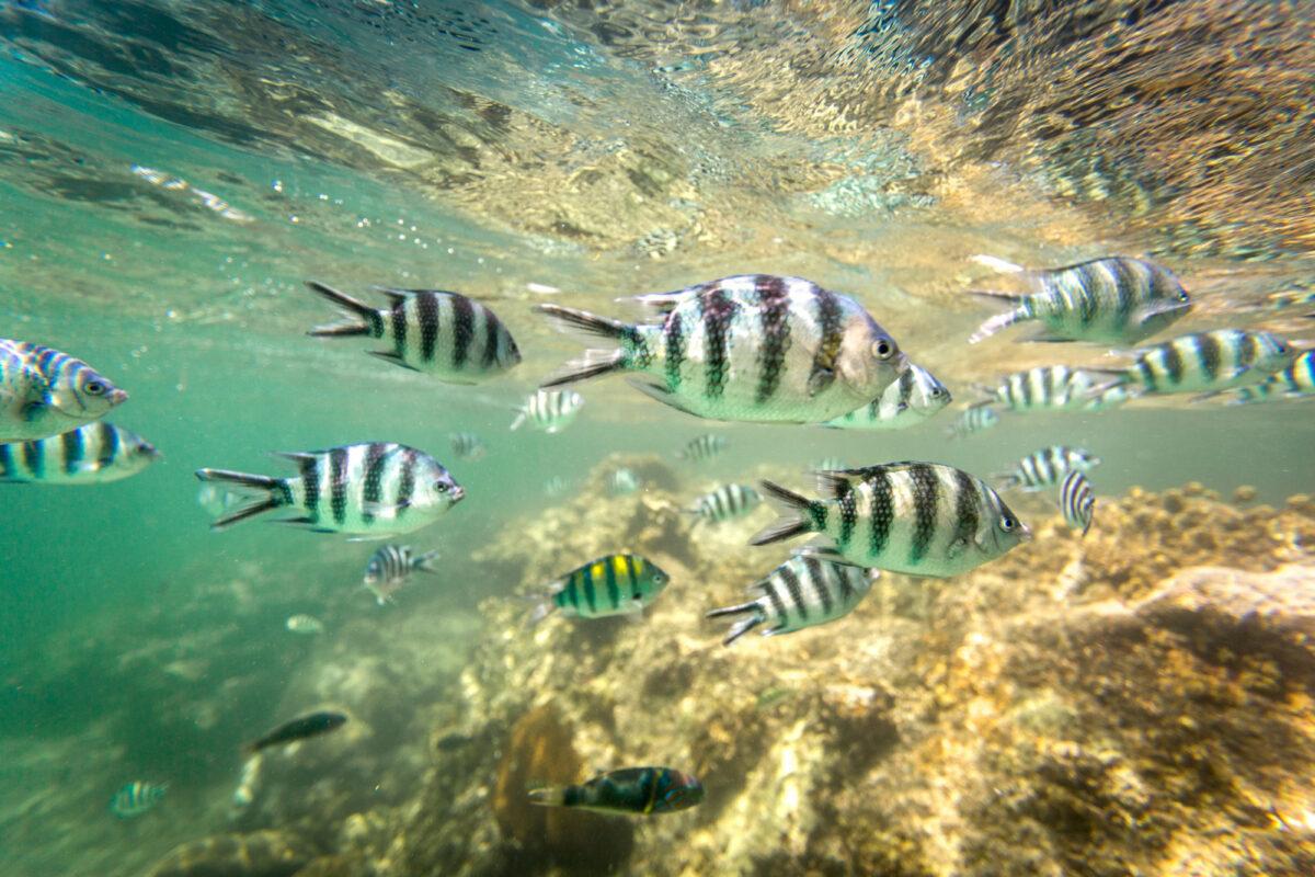 Kenya Watamu Marine National Park