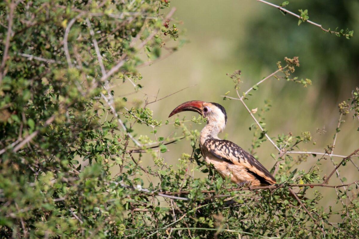Kenya Laikipia bird