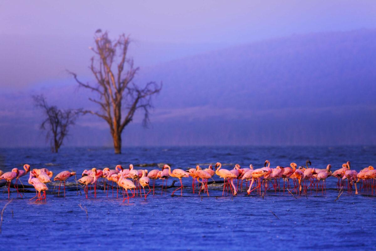 Kenya Nakuru flamingoes2