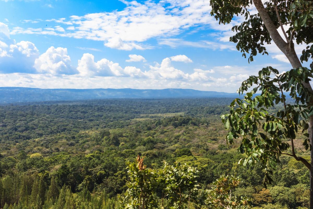 Kenya_kakamega-forest