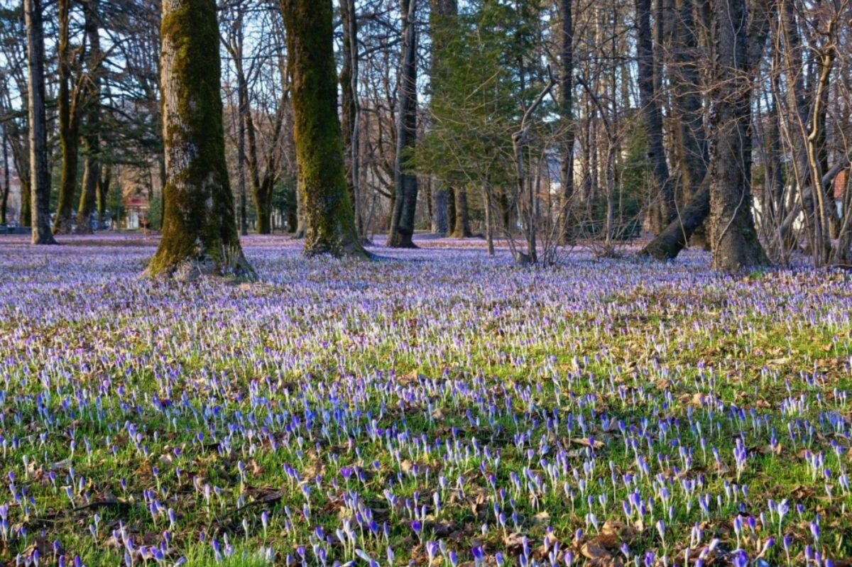 Montenegro Cetinje park spring flowers