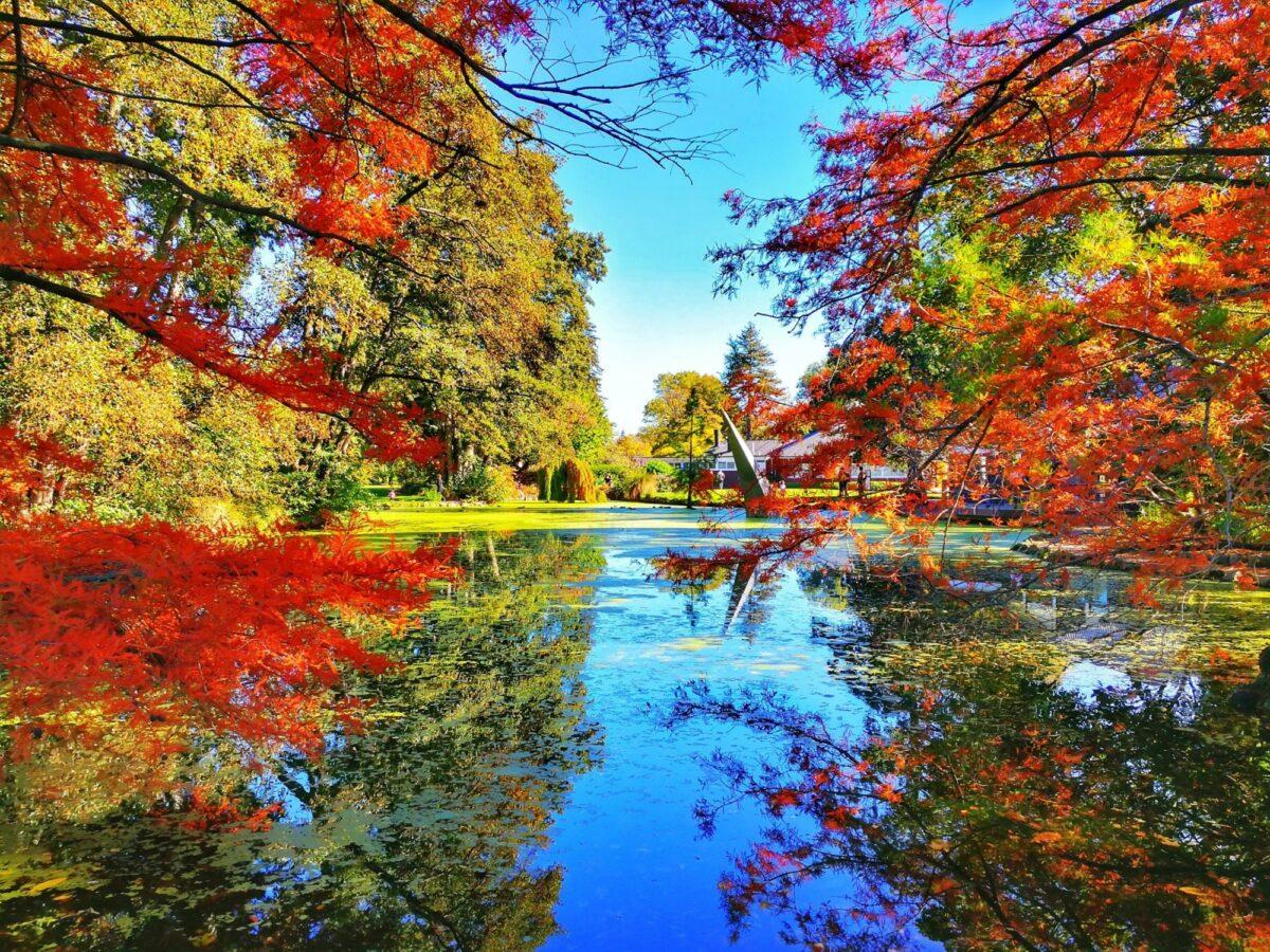 NZ Christchurch Hagley Park