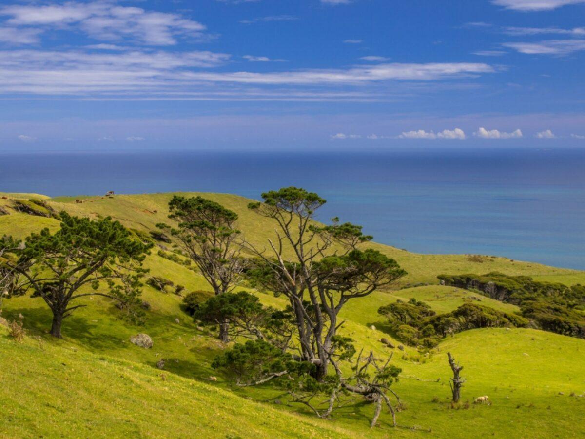 NZ Raglan fields view