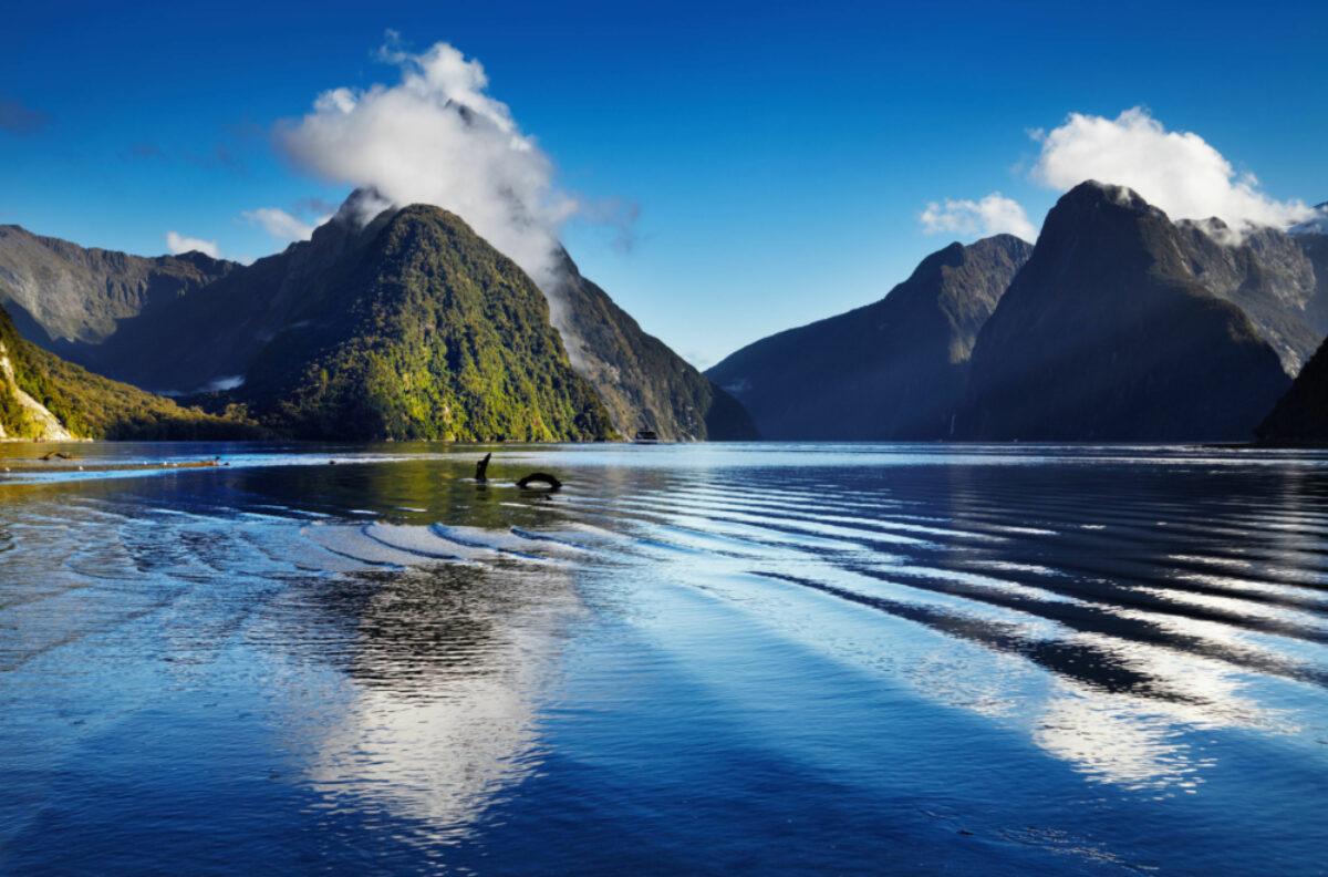 NZ_Sound