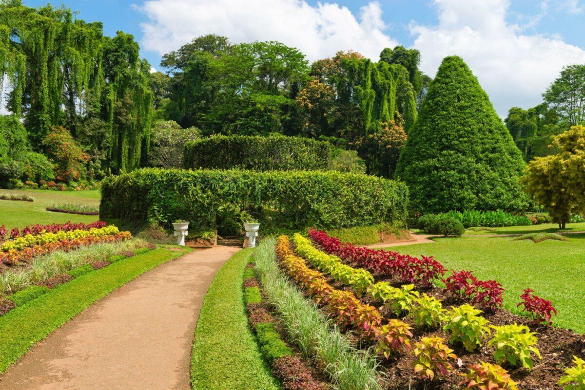 Sri Lanka Kandy Royal Botanical Gardens Peradeniya