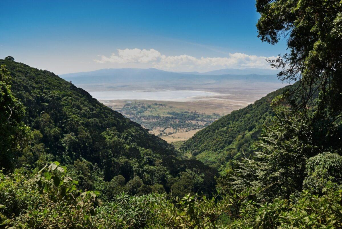 Tanzania Ngorongoro forest