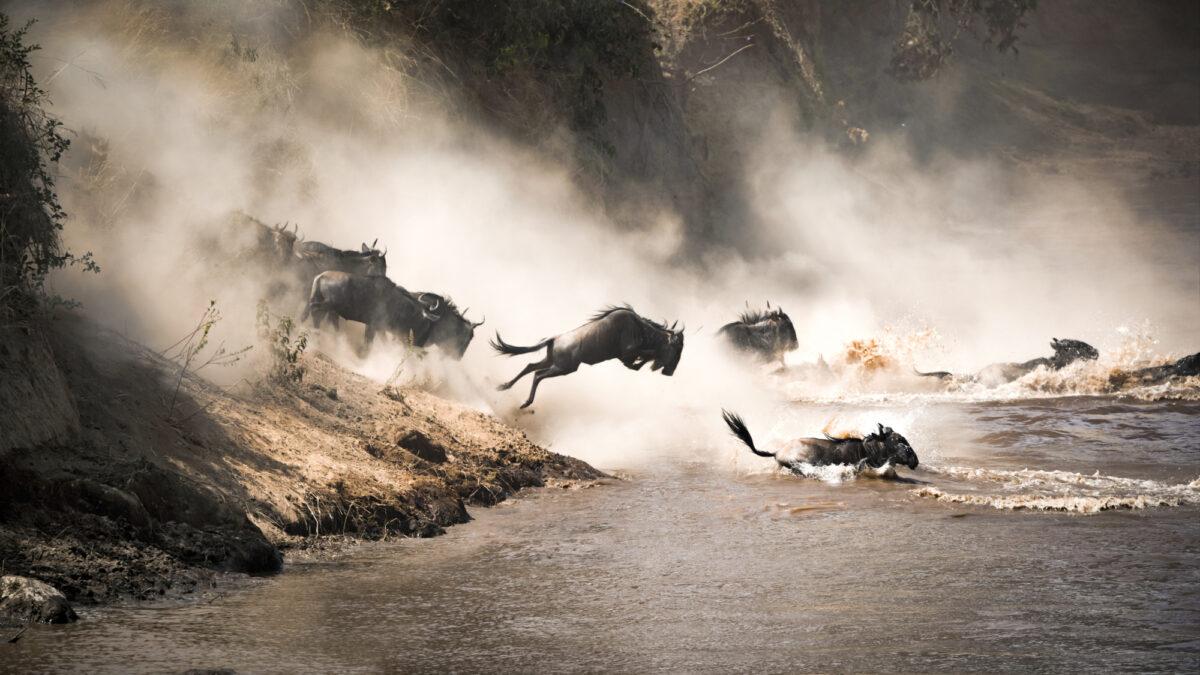Tanzania_Wilderbeastcrossing