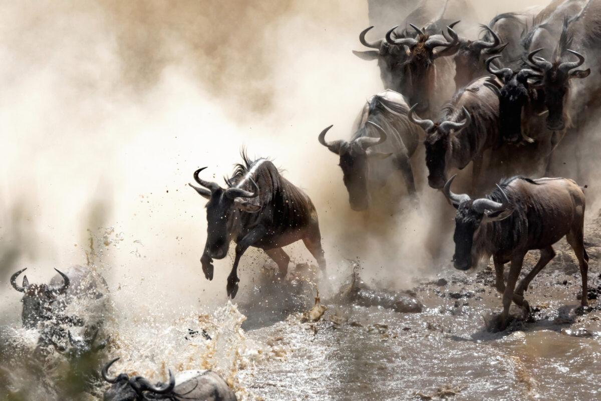 Tanzania_wilderbeast Marariver