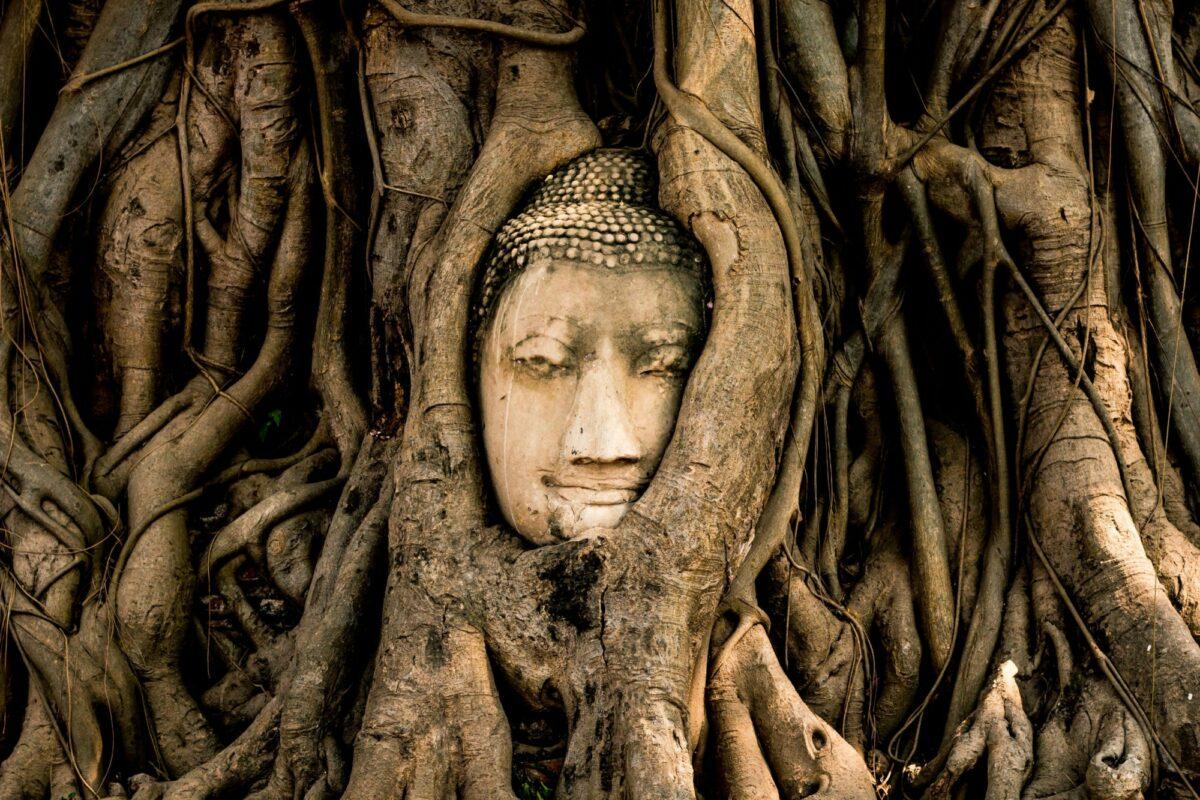Thailand Ayutthaya old Buddha statue head in tree at Wat Mahathat ancient temple