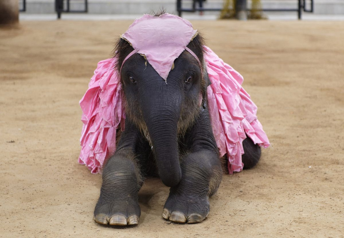 Thailand elephantshow landscape