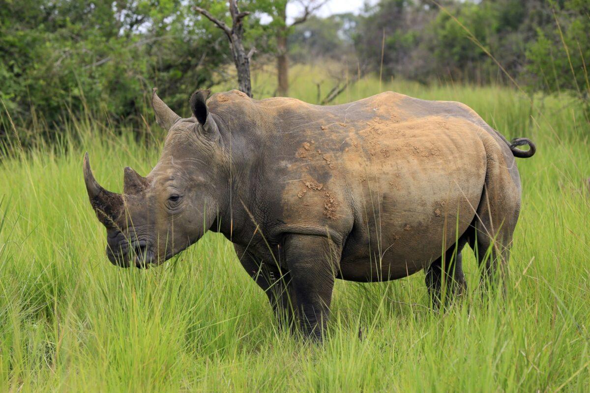 Uganda Ziwa Rhino Sanctuary