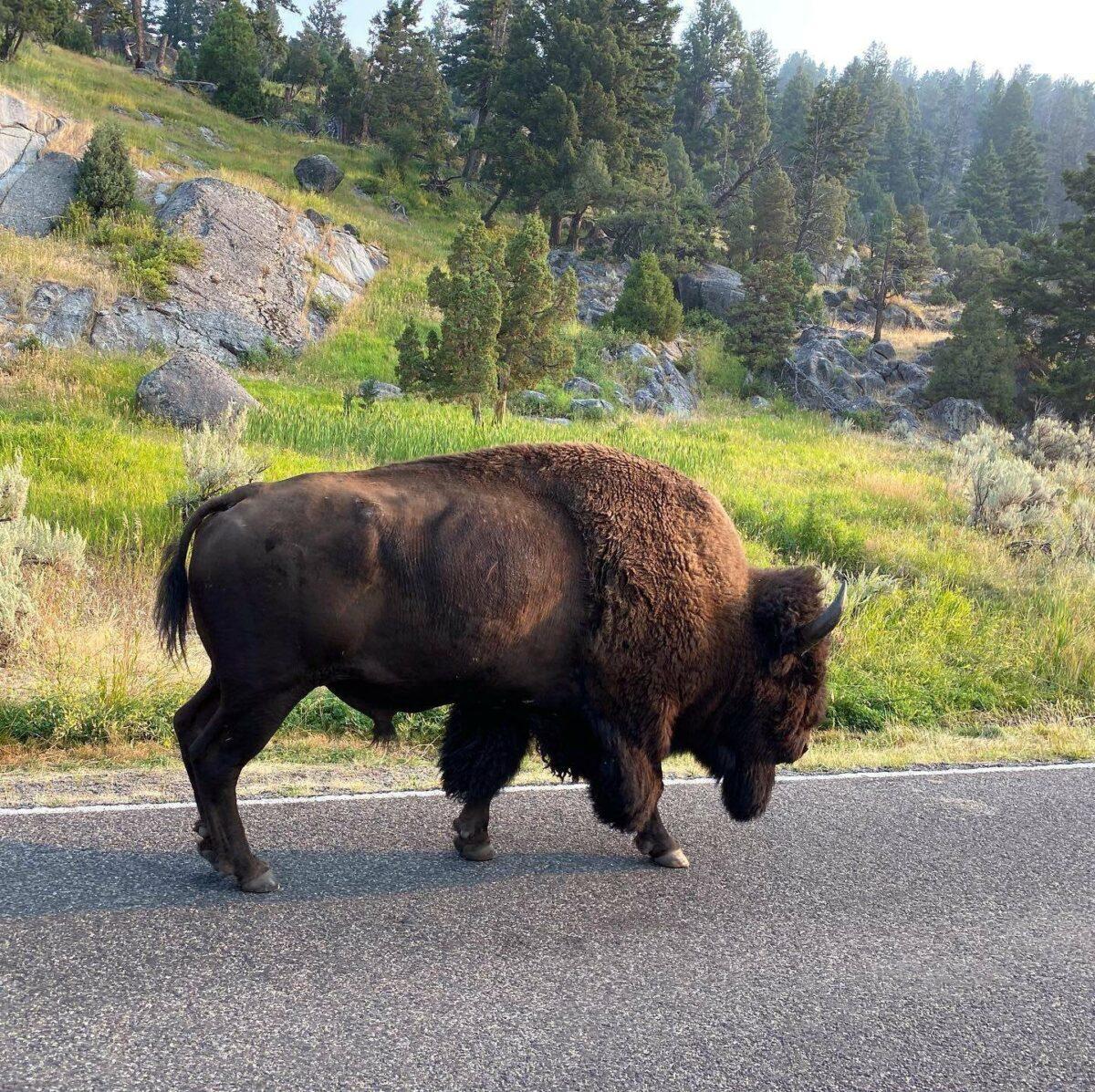 Yellowstone dreamin adventures 2