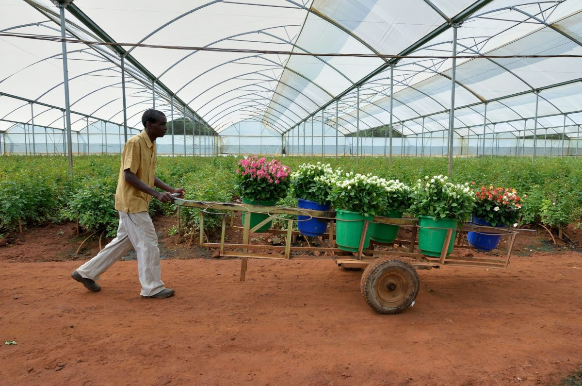 Zambia Lusaka garden centre