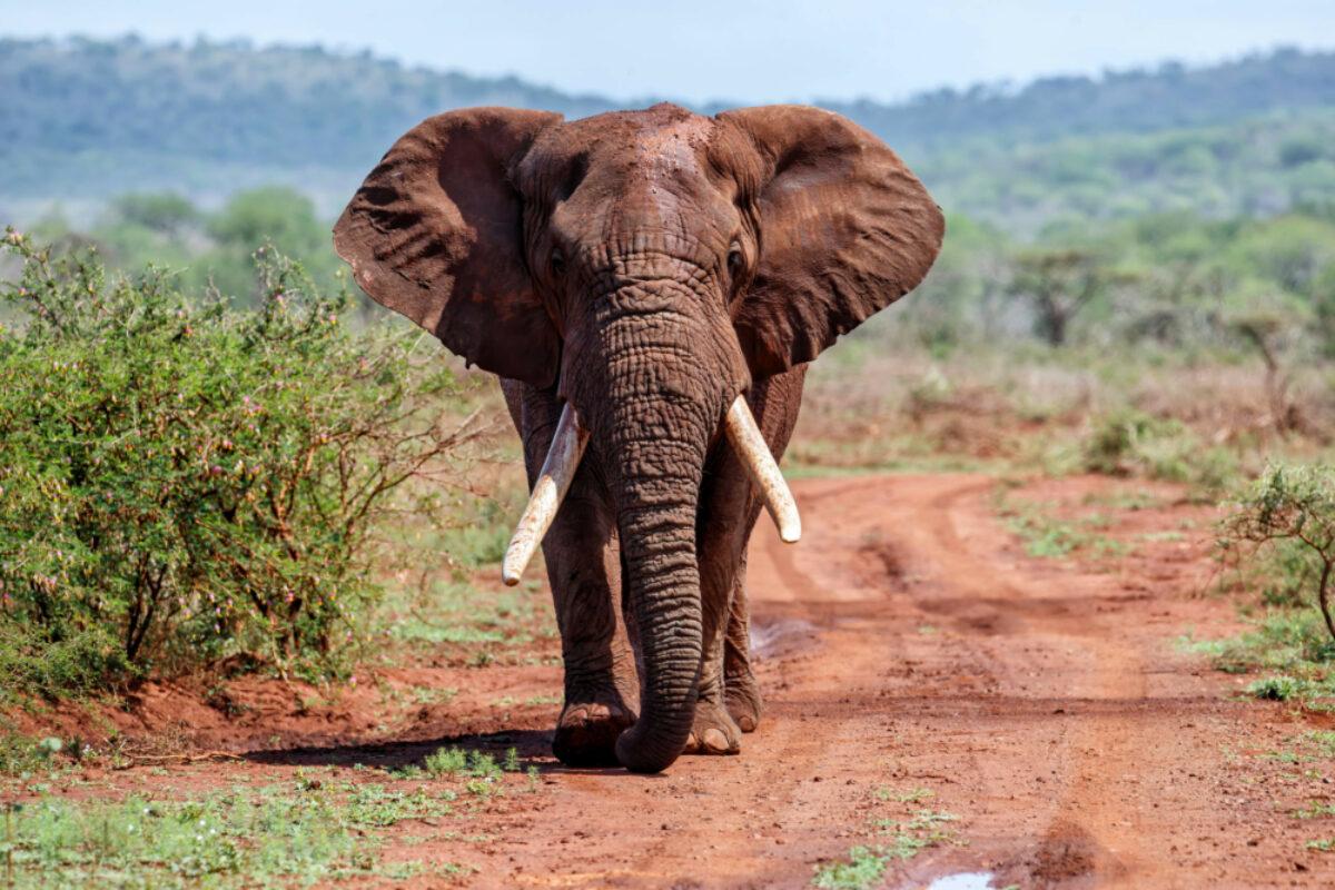Zimanga Game Reserve in Kwa Zulu Natal in South Africa