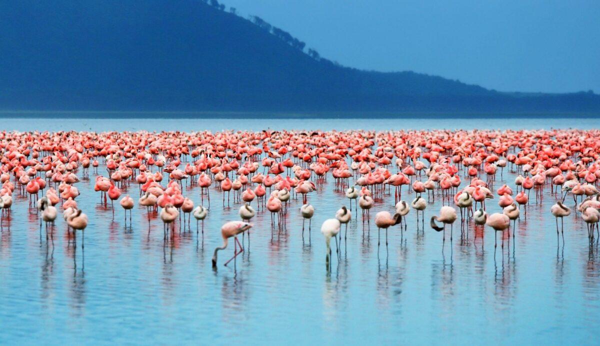 Flamingo Lake Nakuru National Park kenya