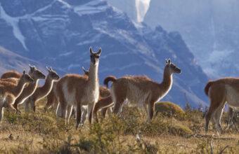 Patagonia wildlife safari