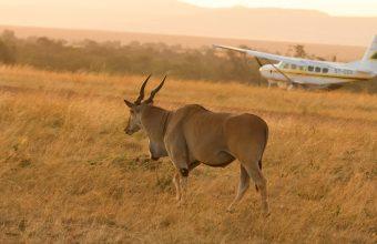 Wings Over Kenya Flying Safari