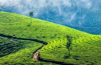 Tropical Kerala
