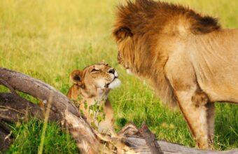 Jewels of Kenya Safari